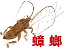 【杀虫公司】中泰兴盛