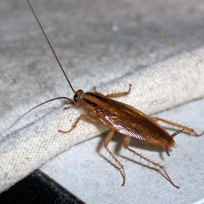 【北京灭蟑螂】中泰兴盛