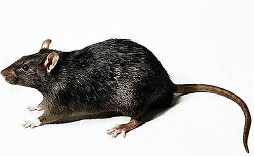 【灭鼠公司】中泰兴盛