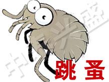 【北京除虫公司】中泰兴盛