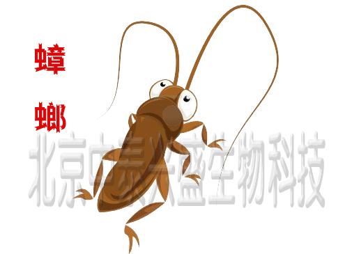 杀虫公司 除虫公司 中泰兴盛 灭虫公司 消杀公司