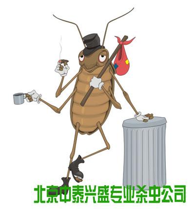 杀虫公司 除虫公司 蟑螂 灭虫公司 消杀公司 中泰兴盛