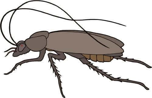杀虫公司 除虫公司 灭虫公司 中泰兴盛 消杀公司